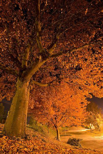 Falling Into The Night - Oregon
