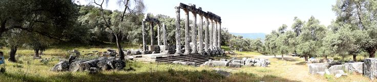 Turcja Turkey - Euromos Ancient Site - The Temple of Zeus Lepsynus