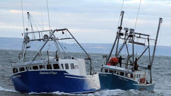 125 best images about random pics on pinterest crabs for Nova scotia fishing