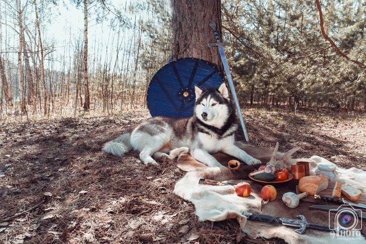 хаска, викинги