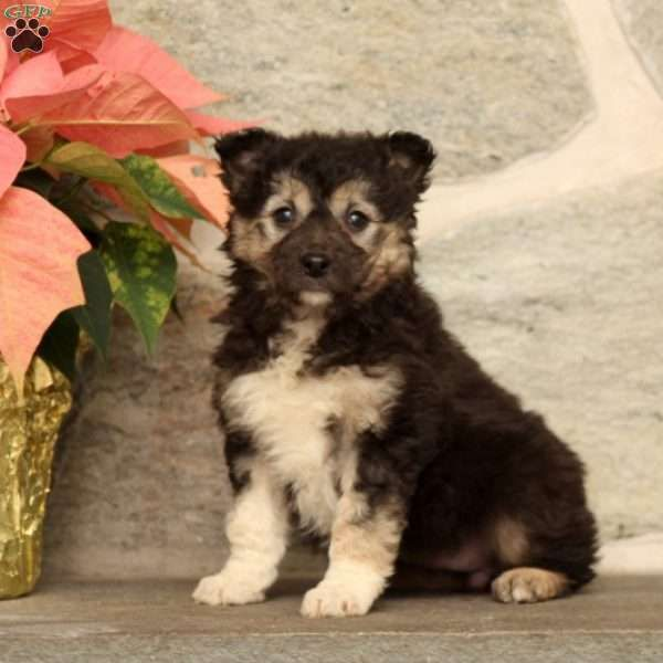 Tessa Border Collie Mix Puppy For Sale In Pennsylvania Puppies For