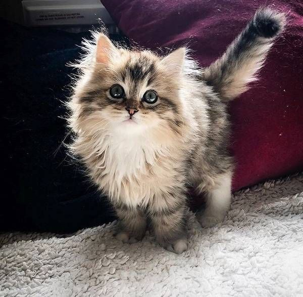 Vaquinha bonito – casa na árvore legal do gato   – Katzen