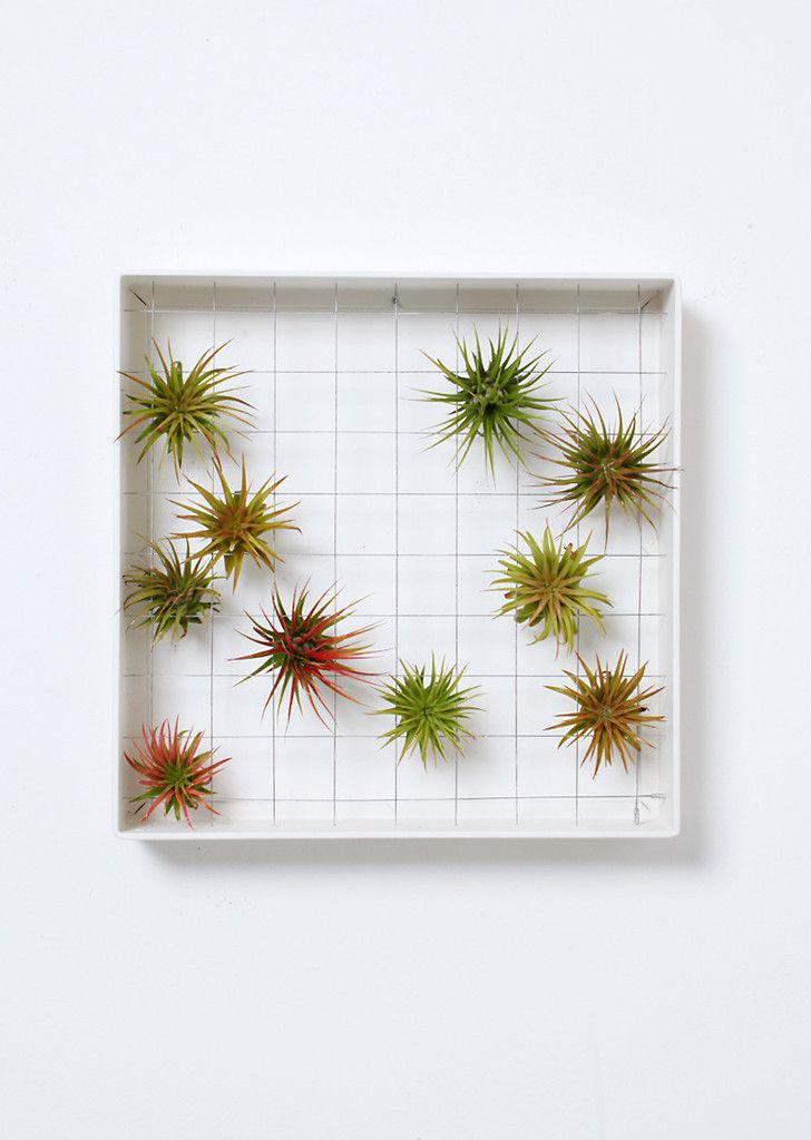 AirplantFrame - square | Airplantman Webshop