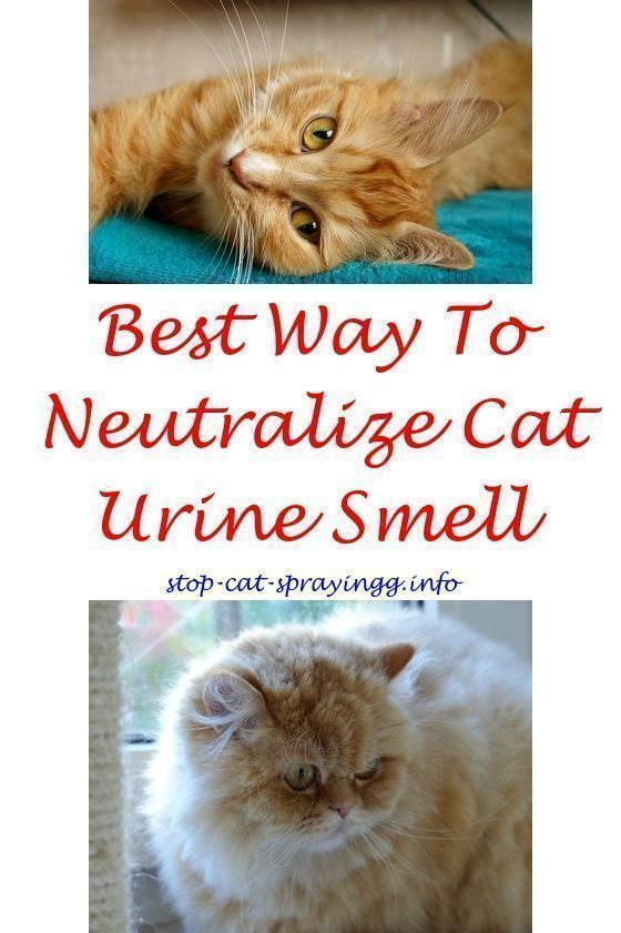 Catpee Unneutered Male Cat Spraying Citrus Cat Spray Furniture Catspraynomore How To Stop Cats From Spraying Cat Urine Smells Flea Spray For Cats