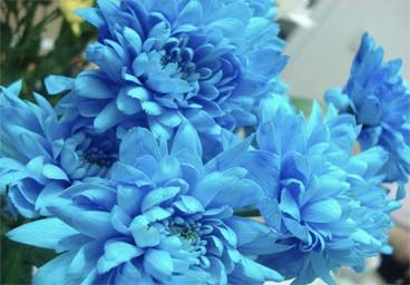 Blue Get Well Flowers - Let Charleston Florist Delivery give you the information to have flowers hand delivered with a special Get Well gift to any local hospital or home. Get Well Soon gift baskets are also available and contain great snack items for those who need their bedrest.