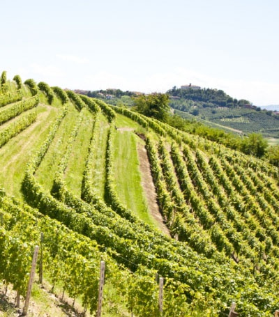 Montalcino and the Brunello wine tour... 8 hrs. of wine deliciousness!!!!