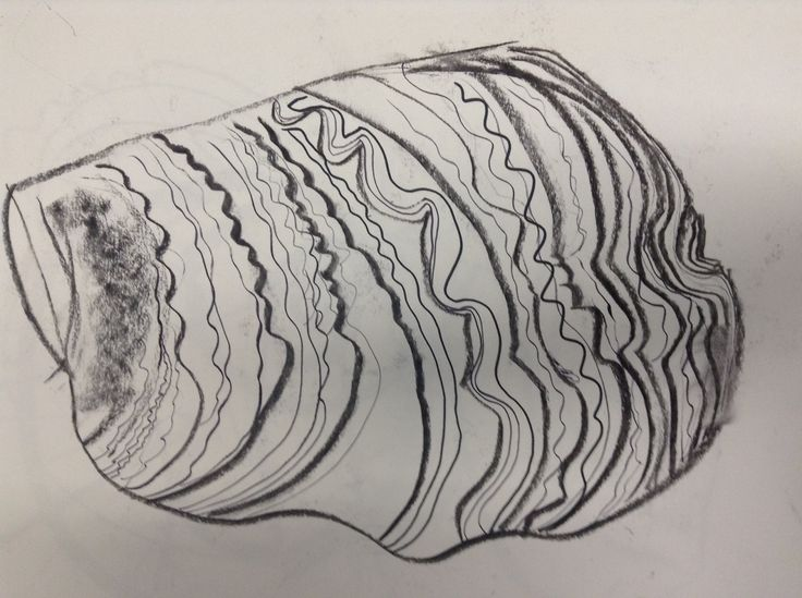 Contour Line Drawing Shell : Images about drawing on pinterest abstract