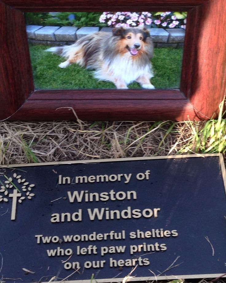 A beautiful way to remember a family pet