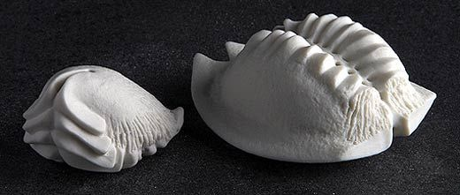 Ceramics by Maggie Barnes at Studiopottery.co.uk - 2012. Miniature Fossil Forms  4 and 7 cms. photo by David Chalmers Photography