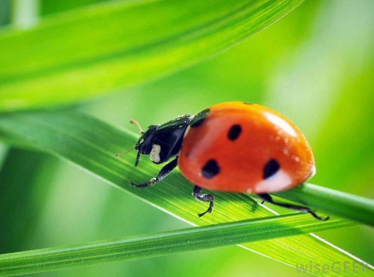 You can order ladybugs over the Internet or via a mail order catalog service. Many garden companies offer mail order ladybugs...