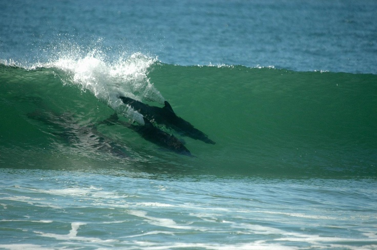 Yamba, where i got to share a wave with dolphins