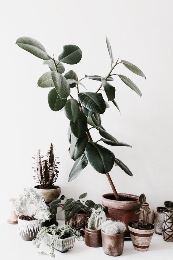 23 best diana cavendish images on pinterest beds for Indoor gardening diana yakeley