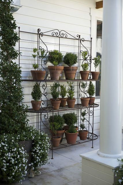 Terracotta pots with rosemary topiary on metal plant rack (bakers rack).