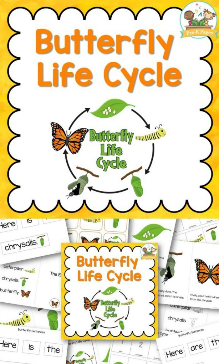 Predownload: Butterfly Life Cycle Pre K Pages Butterfly Life Cycle Life Cycles Life Cycles Preschool [ 1163 x 700 Pixel ]