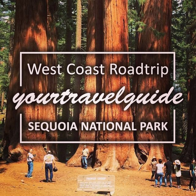 The next big stop on my West Coast Road Trip will be the Sequoia National Park.  ———————————————— My blogpost about the Death Valley is now available on my website.  yourtravelguide.org ———————————————— If you are interested, i uploaded a new video about my Death Valley visit on my youtube channel.  yourtravelguide ———————————————— #sequoia #forest #wood #nationalpark #sunrise #getoutside #instatravel #photography #adventure #explore #picoftheday #travelgram #travelphotography #seetheworld
