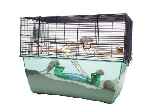 Best gerbil cages ideas on pinterest mouse cage