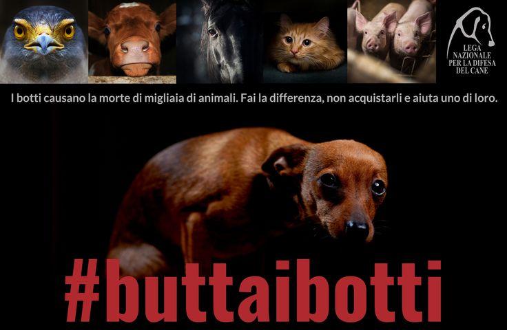 #buttaibotti - Fuochi d'artificio, petardi e botti sono pericolosi per gli uomini e per gli animali. Come ogni anno, Lega Nazionale per la Difesa del Cane ricorda tutti i semplici ma pratici consigli per proteggere i nostri familiari a quattro zampe.