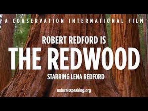 SEKVOJE - Robert Redford mluví za sekvoje...
