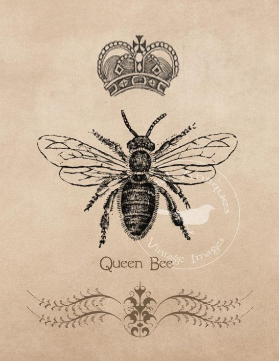Vintage Bee Images Large Frameable Instant by DigitalAntiques
