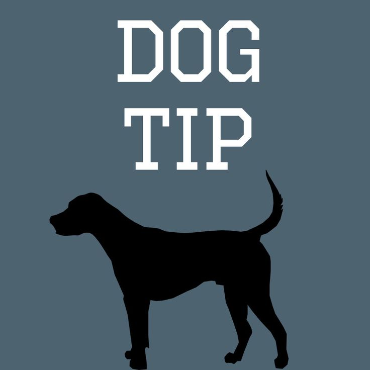 Dogadvice: Dogs do what works. If using treats works, then why not?🐕