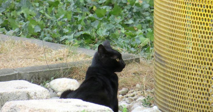 El Ayuntamiento advierte del tercer caso de envenenamiento de gatos callejeros