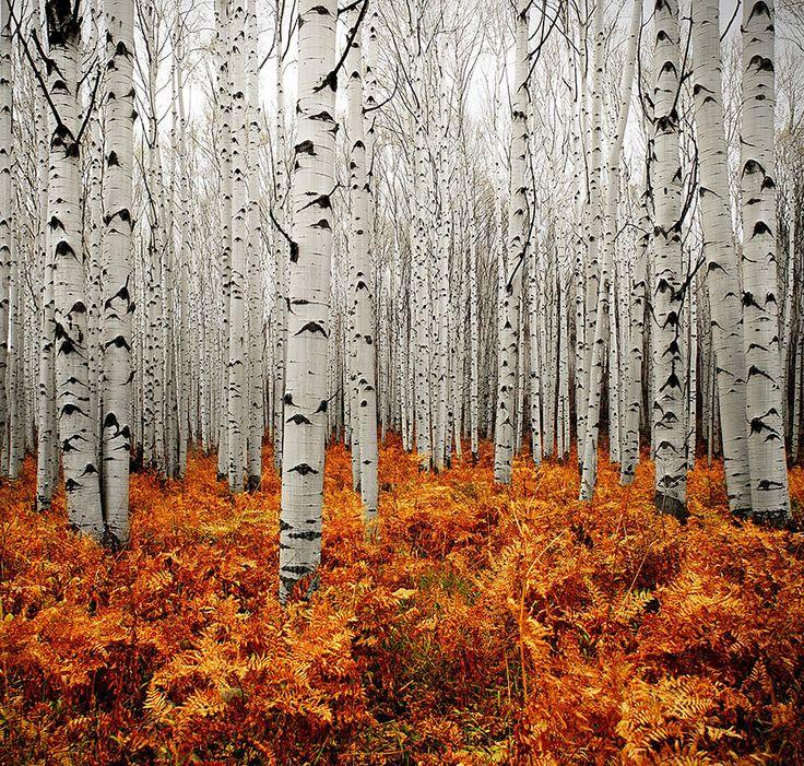Autumn – Talin Ingul