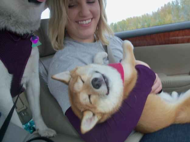But hey, it helps narrow down the people that are actually important. | 27 Signs You Are A Shiba Inu