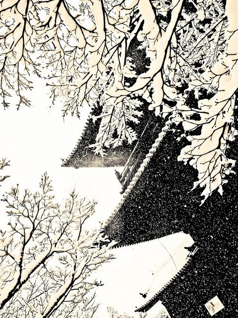 Dans trois mois ce sera d'un beau vert clair by Stéphane Barbery, via Flickr