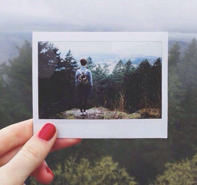 | advenтυre, polaroid, Fuji, Fujifilm, film, trees, forest