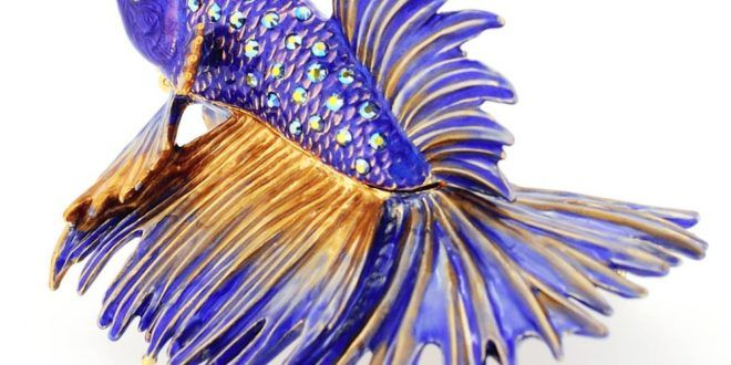 Aneka 15 Gambar Ikan Cupang Yang Unik | Gambar Pemandangan Indah