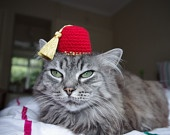 Kitty Fez   quot Fezzes are Cool quot Fezzes Are Cool Cat