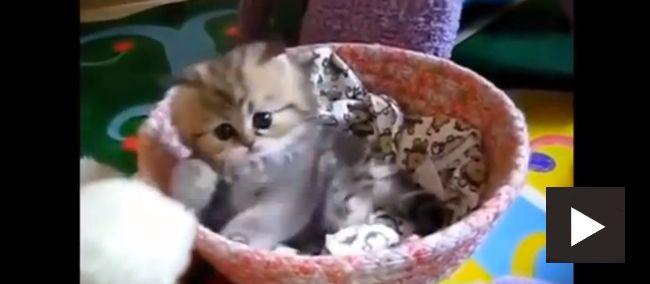 Great Animal Videos - Cuteness Overdose! (Pix 33 of 37)    #avotw