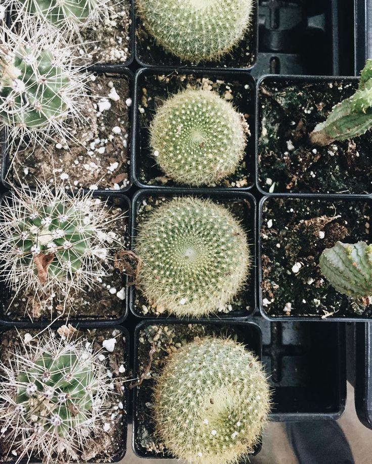 """Black hole ish  #succulent #thinkgreen #plantsarepeopletoo #plantlife #cactus #plant #green #cactusclub #detroit #puremichigan #grow #welovecactus #greenhouse #vsco #succulentaddict #bouture #photography #nature #houseplant #botanical #kinfolk #livefolk #propogation #cactuslover #indoorplants"" via @pheobebotanicals"