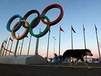 Sochi: Olympic hypocrisy of the West has no limits even when it comes to lightbulbs
