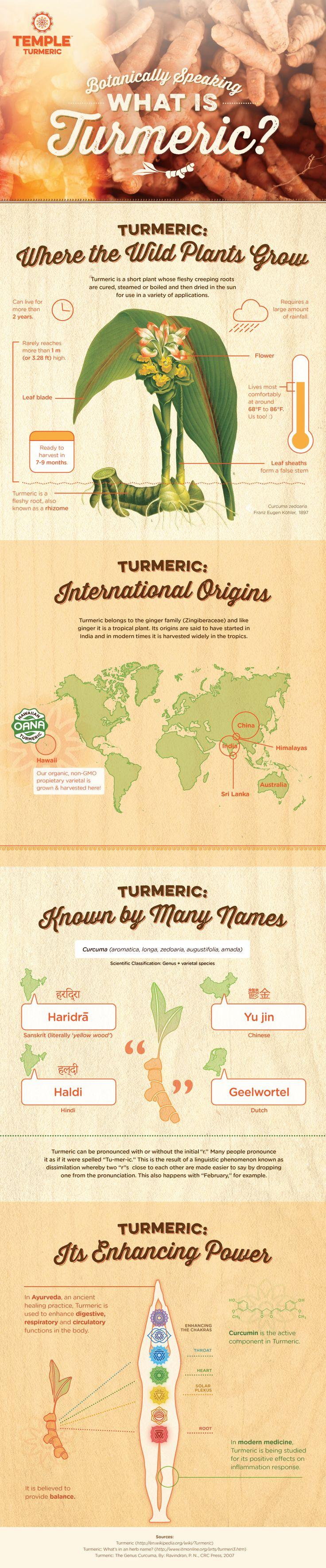 Botanically Speaking - What is Turmeric?    Temple Turmeric