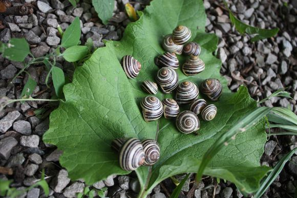 Incredible world of snails -