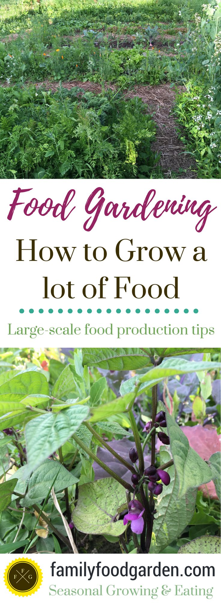 Grow a high-yield garden
