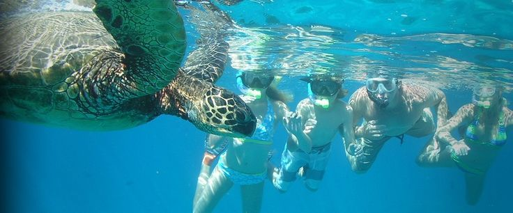 Everyone has an adventure tailored to your individual interests only with Molokini Snorkeling Tours.