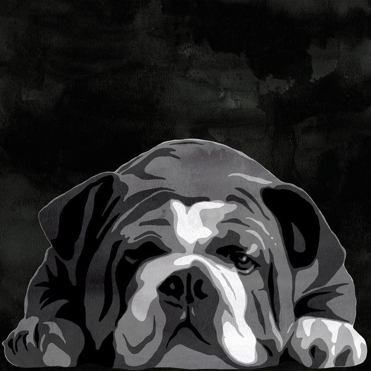 english bull-terrier black 3