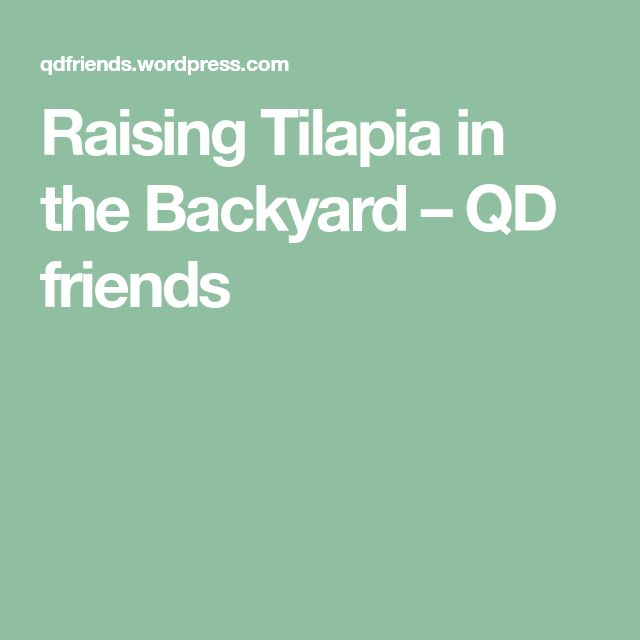 Raising Tilapia in the Backyard in 2020 (With images ...