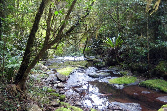 O'Reilly's Lamington National Park - Toolona Creek Circuit