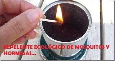 MOSQUITOS: repelentes naturales: café y hojas de laurel.