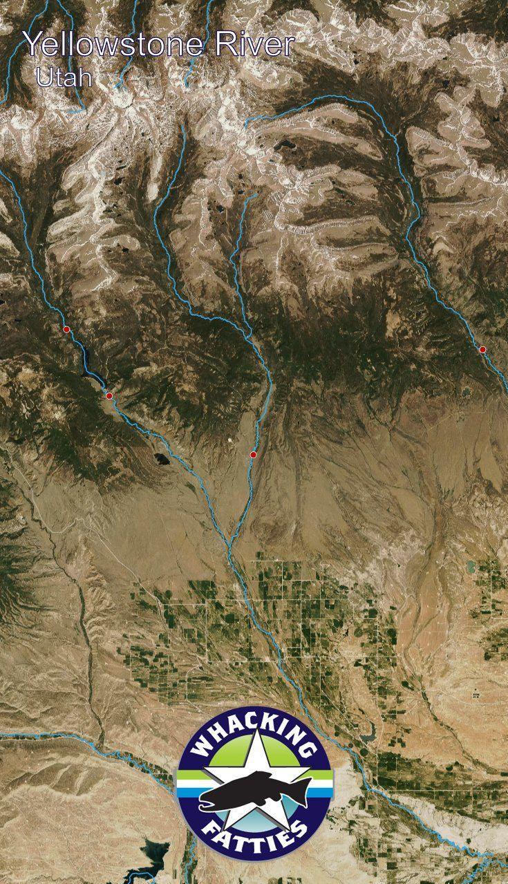 Yellowstone River, Utah fly fishing report. Check out Whacking Fatties for the latest fly fishing report and forecast.  With the goal of better understanding fly-fishing patterns and predicting location and ferocity of fishable events, Whacking Fatties pr