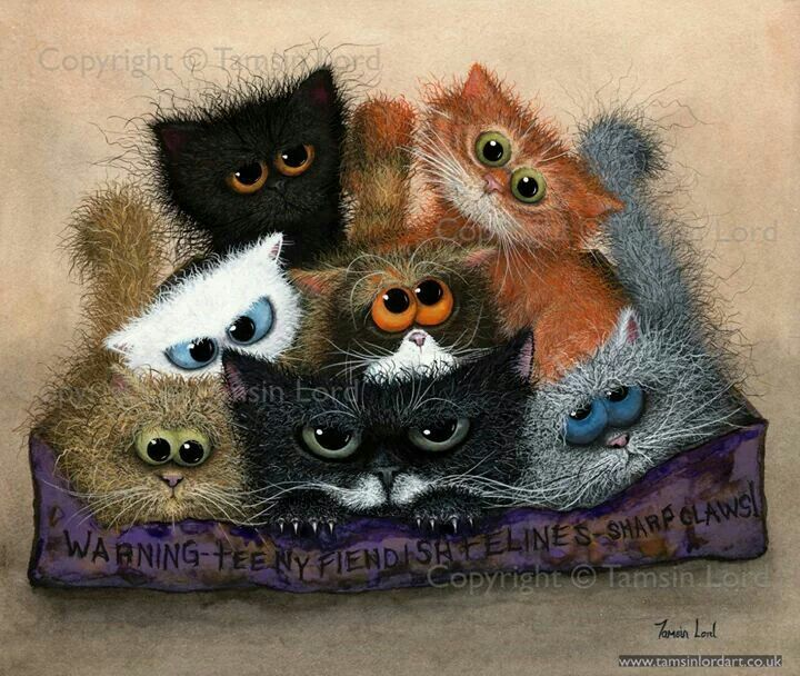 Bunch of cats