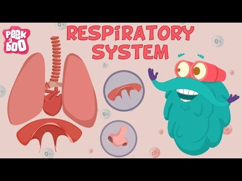Respiratory System | The Dr. Binocs Show | Learn Videos For Kids - YouTube