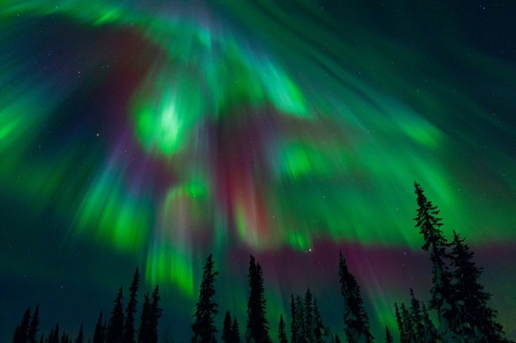 Aurora corona lights in Norway.Atoms, Pine Forests, Northern Lights Purple, Miles Morgan, Trav'Lin Lights, Green, Aurora Borealis, Beautiful Landscapes, Northern Lights Norway