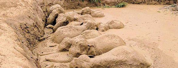 Asiatische Elefanten stecken in einem Bombentrichter in Kambodscha fest