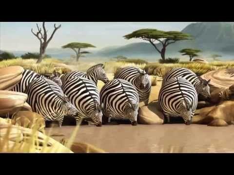 Animation funny cartoon natural habitat in Africa is very funny animation (funny wildlife) (funny animals) - YouTube
