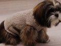Votre petit chien est frileux, tricotez-lui un petit manteau en laine, ce modèle facile est réalisé au points jersey et point mousse. En complément de ces explications, une vidéo vous explique ...