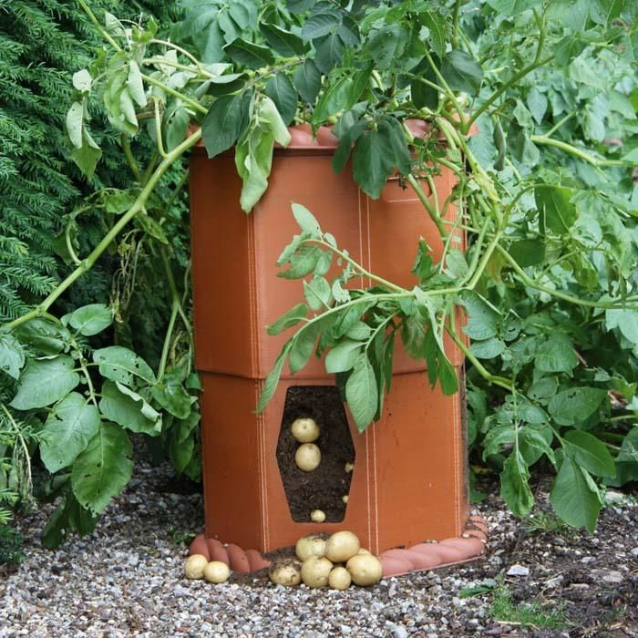 Charming Potato Barrel   Grow Delicious New Potatoes On A Patio Or Even A Balcony In  This